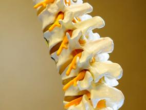 Ostéopathe Peymeinade